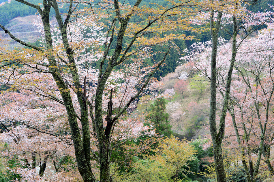copyright_bluelapisroad_2015kansai_intro