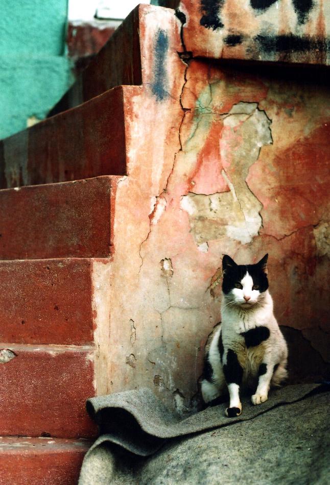 cat at Anadolu Kavagi 1-2