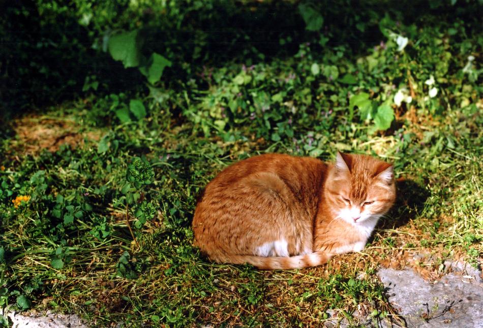 cat at Anadolu Kavagi 2